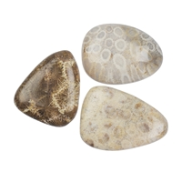 Smooth Stones Petrified Coral