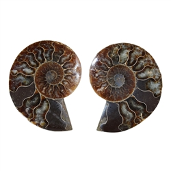 Ammonite Pair, 07 - 08cm, A quality