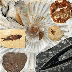 "Starter package ""Fossils""