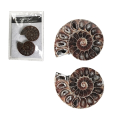 Ammonites 3,0-3,5cm (small) with Certifikate in Pouch