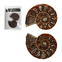 Ammonites 4,0-4,5cm (large) with Certifikate in Pouch