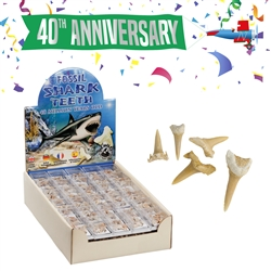 "Pop-Up Display ""Fossil Shark Teeth"" (90 boxes)"