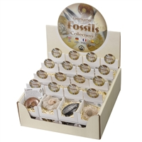 "Pop-Up Display ""Fossils Collection"" (32 Schachteln)"