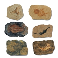 Starter Set Small Digging Kits with Replicas of Fossils (12 pc/set)