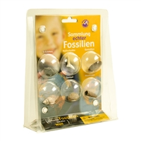 "Blister collection ""Fossils"""